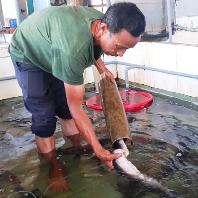 Lão ngư đất võ Bình Định đổi đời nhờ nuôi loài cá 'tiến vua'